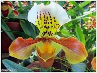 Орхидея. Ботанический сад МГУ.