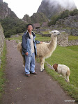 Llama, Machu Picchu  [2005]