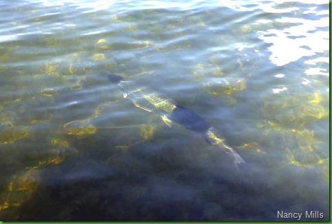 05 - A big FISH