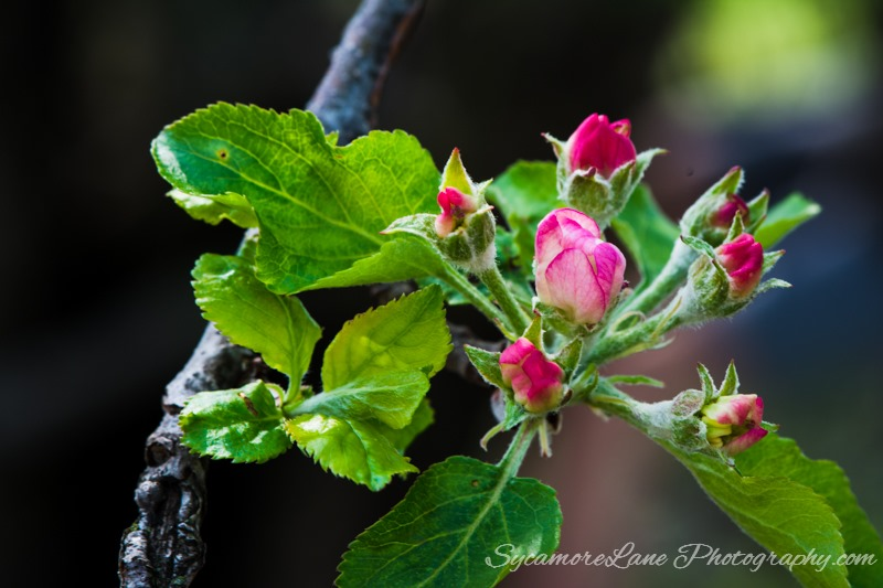 SycamoreLane Photography Nature-May 2015 (4)