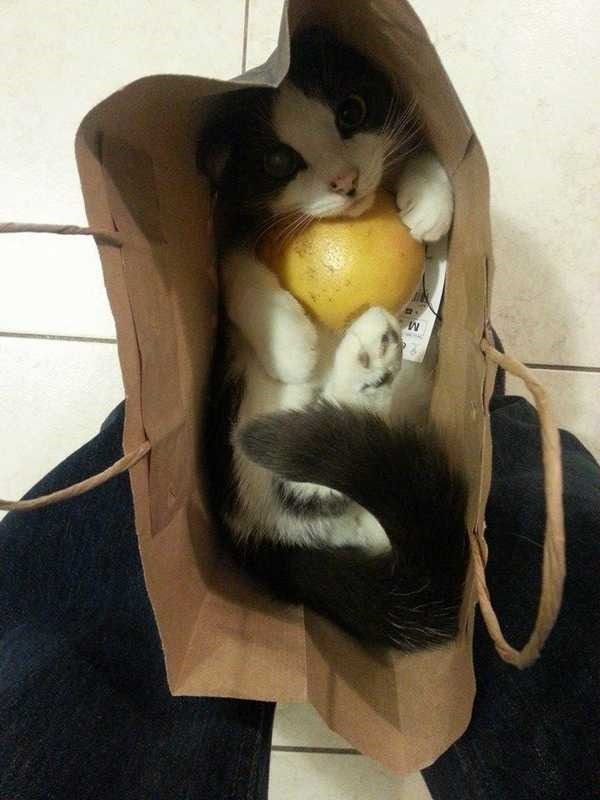 Os gatos não são muito bons em esconde-esconde 24