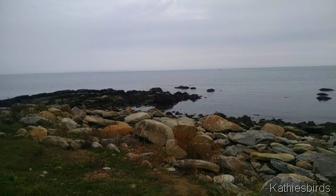 11-5-15 rocky shore at harkness memorial SP