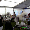 Kiállítások » Szombathely és Oberwart CACIB