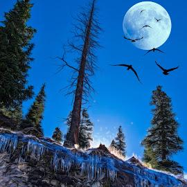 black birds by Kirk Kimble - Digital Art Places ( bird, moon, tree, ice, night )