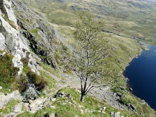 Tree on Jacks Rake