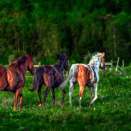 untitled by Dragan Milovanovic - Animals Horses