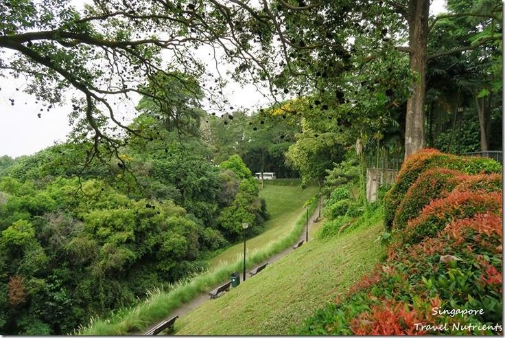 新加坡花柏山 (27)