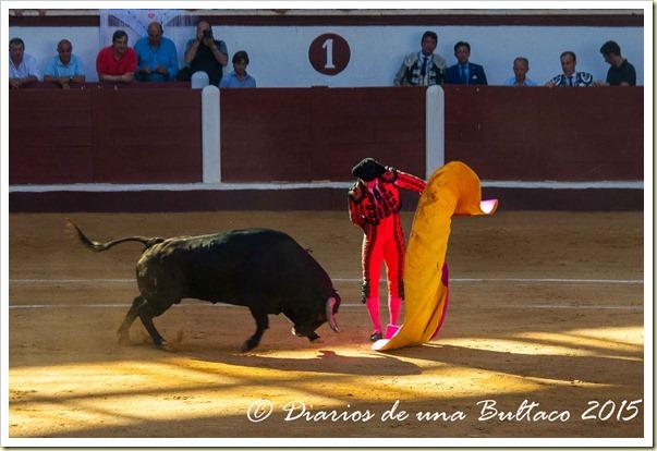Toros1-9462