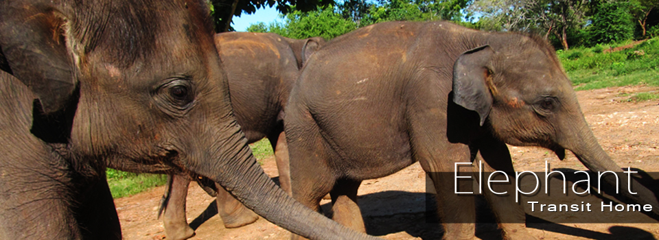 Elephant Transit home slideshow