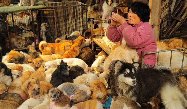 Image of A Woman Who Saves Hundreds of Dogs from Annual Dog Meat Festival in China