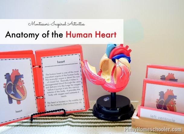 HumanHeartFB
