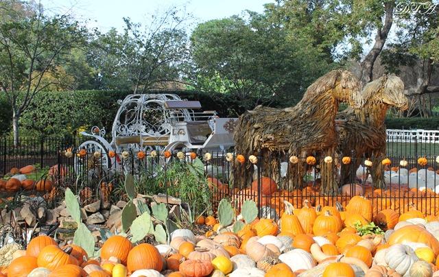 Pumpkins Arboretum 104