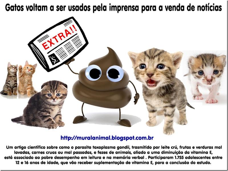 gatos-imprensa