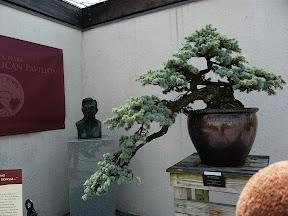 CM Bonsai #9