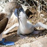 Almoço!!! - Española - Galápagos