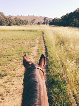 Veiw from our arena | A Riding Habit