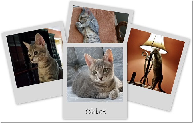 Chloe collage