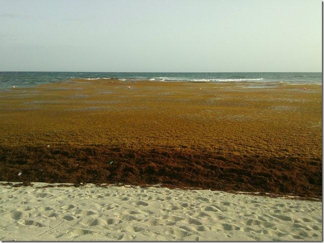 playa_herba002