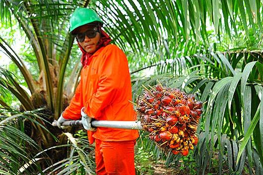 palm-oil-630x419