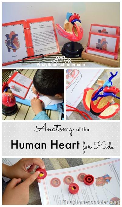 AnatomyheartPIN