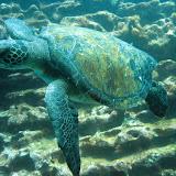 GalapagosDive2Tortuga