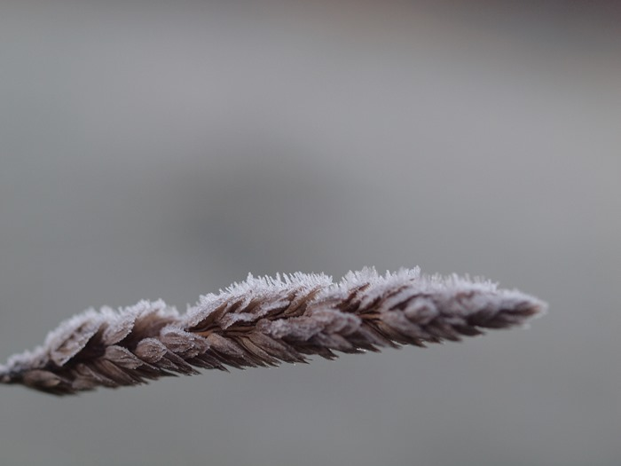 virtù - first frost