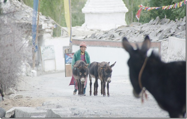 Ladakh158