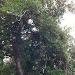 The beads in the trees in New Orleans 07222012-01