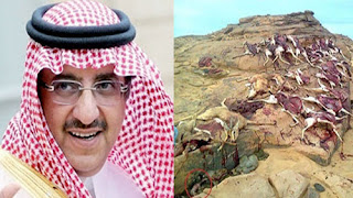 Le ministre de l'intérieur saoudien en Algérie pour une partie de chasse
