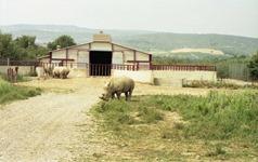 1991.08.31-099.30 rhinocéros