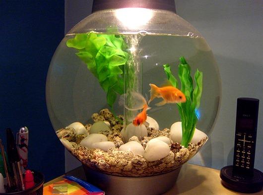 Круглый-аквариум-для-рыбок-2(2)