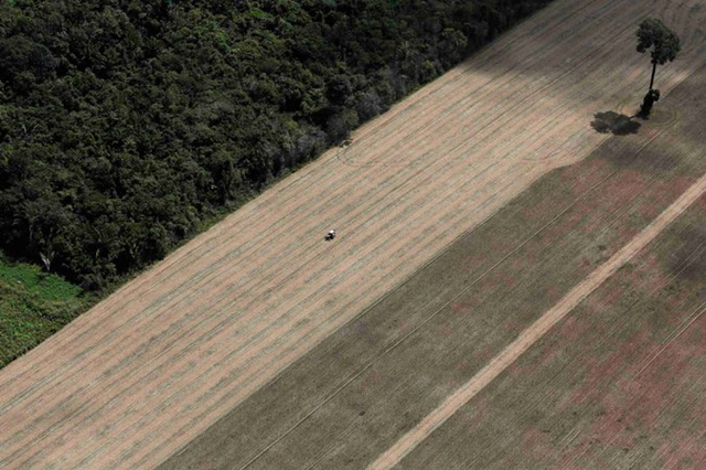 Aerial view of a tractor on a wheat plantation that used to be virgin Amazon rain forest in Brazil. Photo: Nacho Doce / Reuters