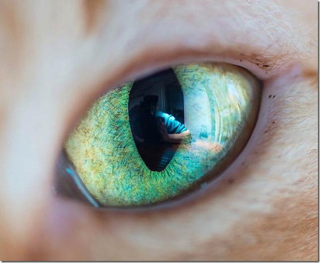 Cats Eyes3