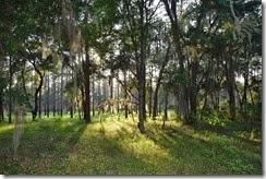Campsite view 8