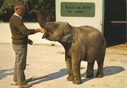 Lessay éléphant