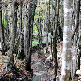 by Marijan Alaniz - Nature Up Close Trees & Bushes (  )