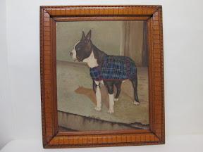 Boston Terrier Portrait