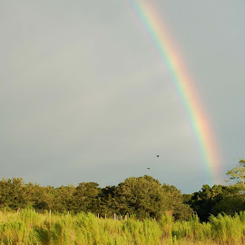Rainbow 003 by Philip Molyneux - Landscapes Prairies, Meadows & Fields