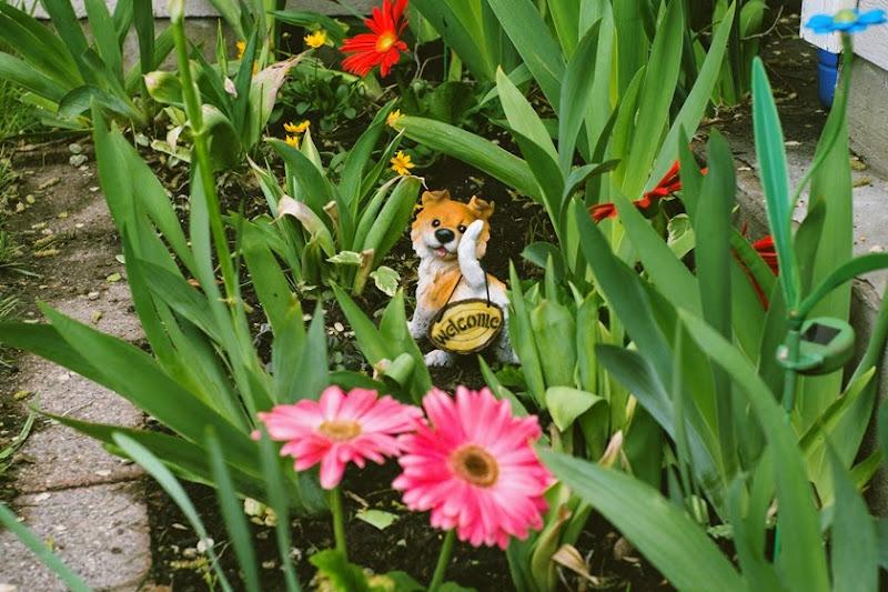 flowergarden1