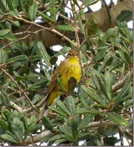 birdIMG_5763