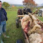 Farkastámadás: 12 áldozat, 7 eltűnt