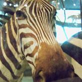 Houston Museum of Natural Science - 116_2780.JPG