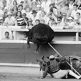 Plusieurs fois des toros ont franchi la talenquère, mais peu ont blessé