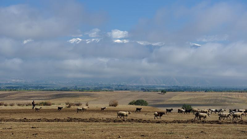 Pastoritul la poalele caucazului.