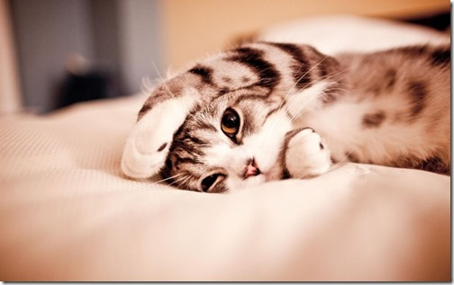 1123cute-cats-wallpapers-background-92
