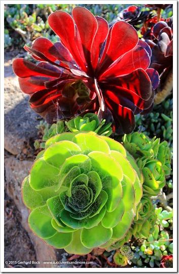 150926_SucculentExtravaganza_262