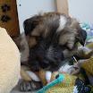 Buddy 12-06 6.jpg
