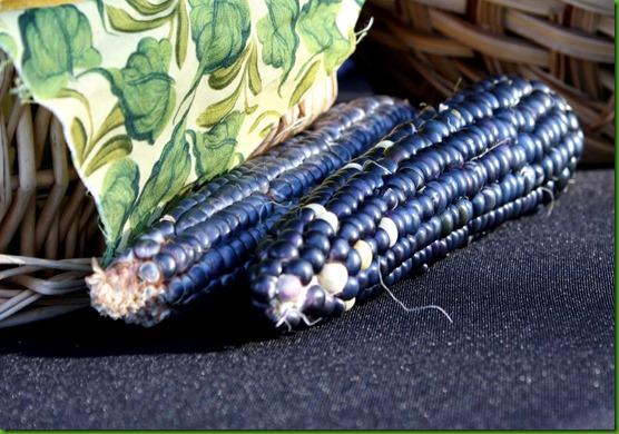 Milho Hopi Blue