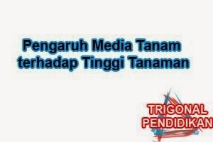 Pengaruh Media Tanam terhadap Tinggi Tanaman