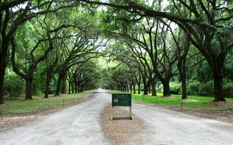 Oak-lined drive Wormsloe Historical Park